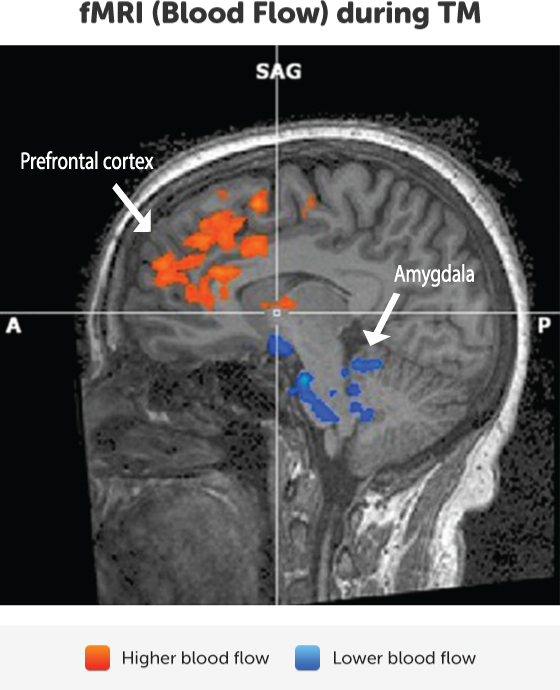 bloodflow-prefrontal-amygdala